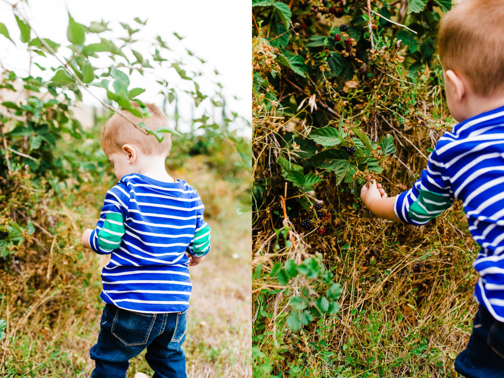 Phelps Fruit and Berry Farm | Truly Photography