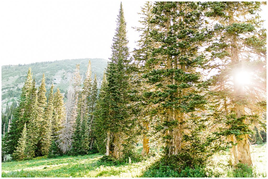 3 Things to Know Before Shooting at Albion Basin | Utah Photographer