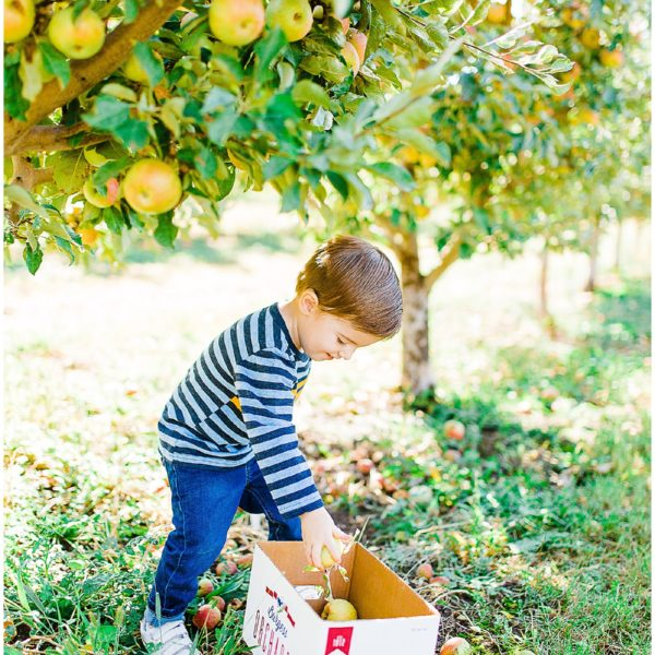 Apple Picking at Burgess Orchards | Utah Family Photographer